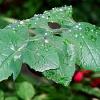 rain_135955